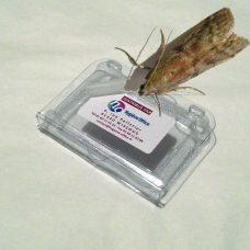 pi ge pour les insectes des denr es stock es hygi ne office la boutique. Black Bedroom Furniture Sets. Home Design Ideas