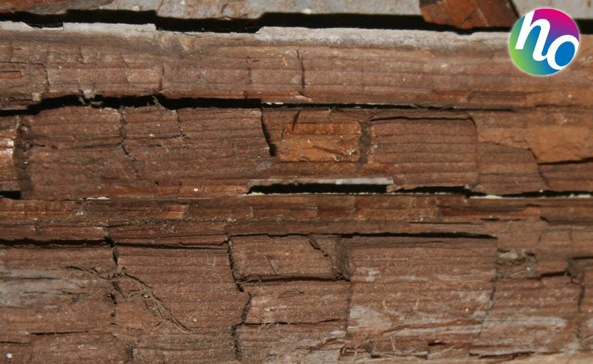Traitement bois charpente humidit obtenez for Traitement des poutres en bois