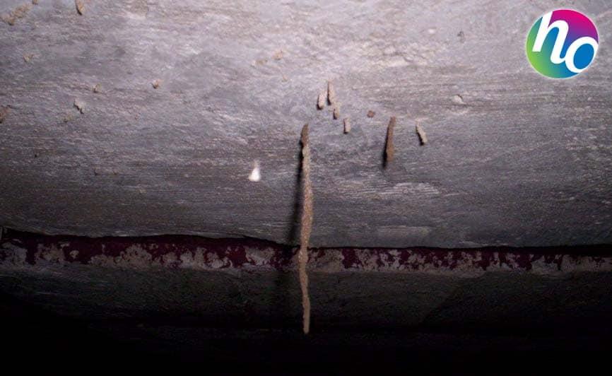 hygiene-office-termites-016