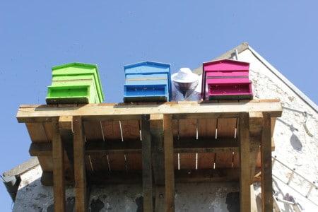 Installation des ruches au siège social d'Hygiène Office et de Bepox