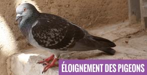eloignement-des-pigeons