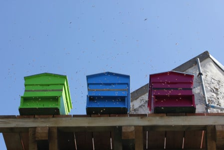 Nos abeilles sont installées à 6 mètres de haut dans des conditions idéales préconisées par nos apiculteurs (ensoleillement, expositions, etc…).
