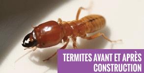 termites-avant-et-apres-construction