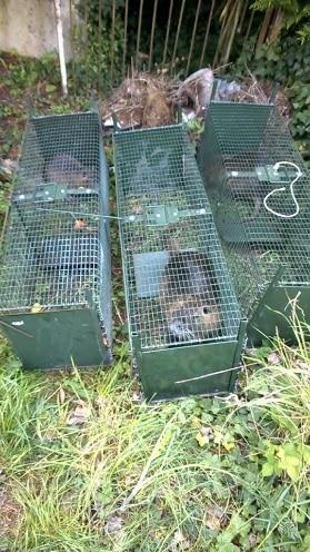 autres cages