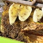 récolte du miel à hygiène office et bepox