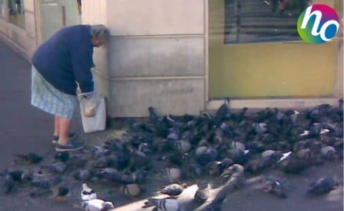Une dame qui nourrit les pigeons